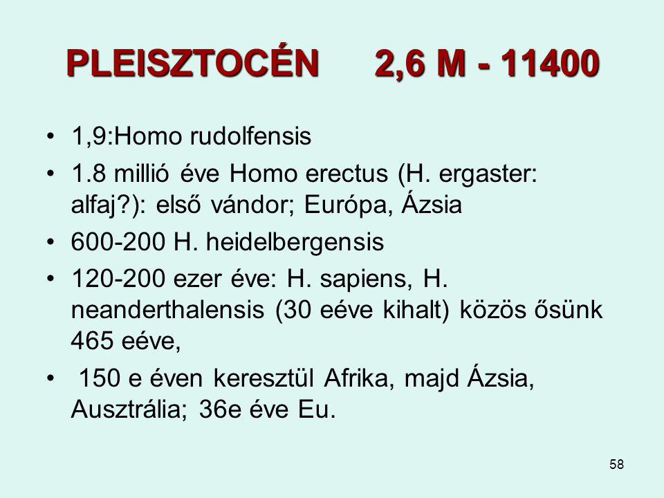 58 PLEISZTOCÉN 2,6 M - 11400 1,9:Homo rudolfensis 1.8 millió éve Homo erectus (H. ergaster: alfaj?): első vándor; Európa, Ázsia 600-200 H. heidelberge