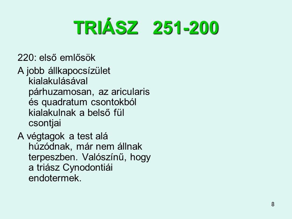8 TRIÁSZ 251-200 220: első emlősök A jobb állkapocsízület kialakulásával párhuzamosan, az aricularis és quadratum csontokból kialakulnak a belső fül c