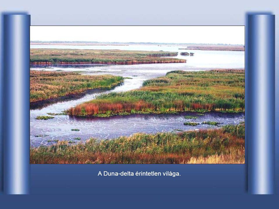 A delta-vidék növényzete trópikus bujaságú