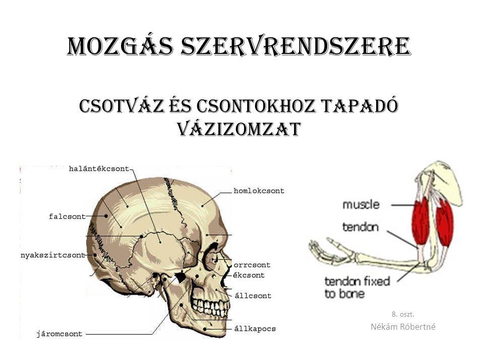 Mozgás szervrendszere CSOTVÁZ ÉS csontokhoz tapadó vázIZOMZAT 8. oszt. Nékám Róbertné