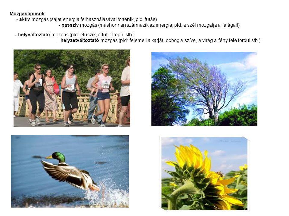 Mozgástípusok - aktív mozgás (saját energia felhasználásával történik, pld: futás) - passzív mozgás (máshonnan származik az energia, pld: a szél mozga