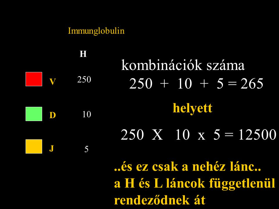 H Immunglobulin VDJVDJ 250 10 5 kombinációk száma 250 + 10 + 5 = 265 helyett 250 X 10 x 5 = 12500...és ez csak a nehéz lánc..