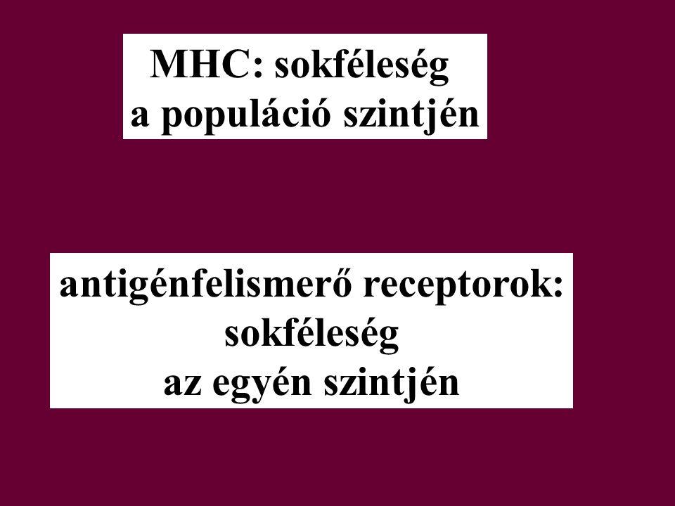 MHC: sokféleség a populáció szintjén antigénfelismerő receptorok: sokféleség az egyén szintjén