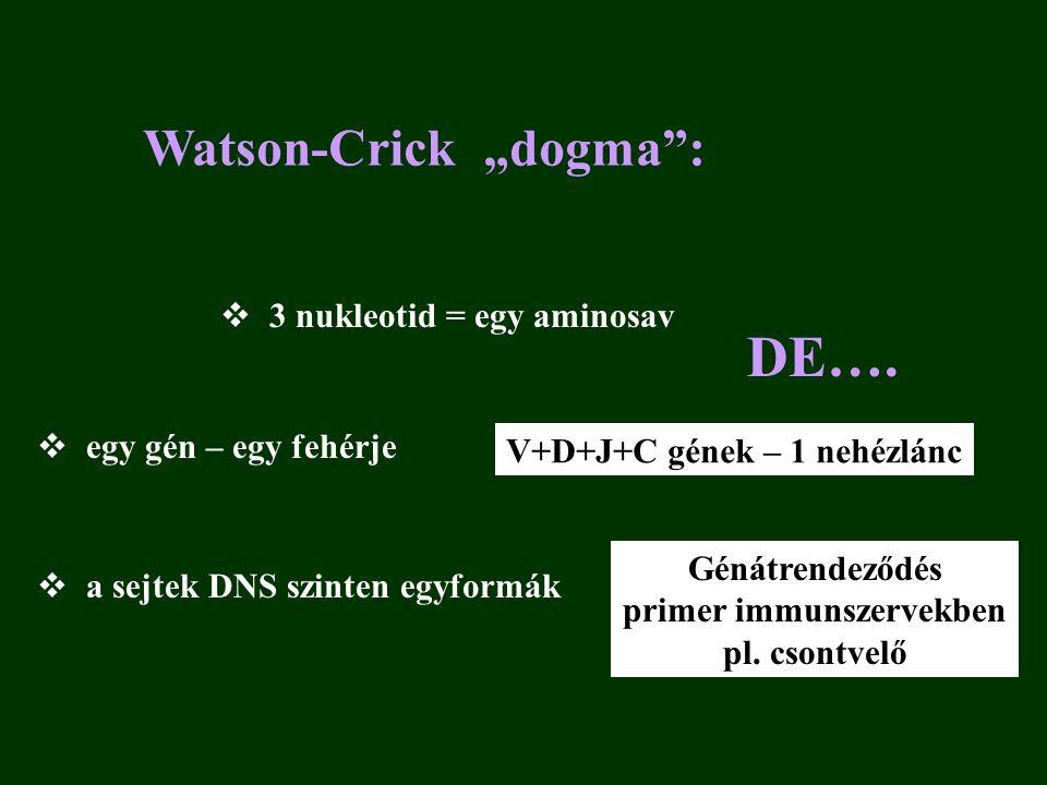 """Watson-Crick """"dogma :  3 nukleotid = egy aminosav  egy gén – egy fehérje  a sejtek DNS szinten egyformák DE…."""