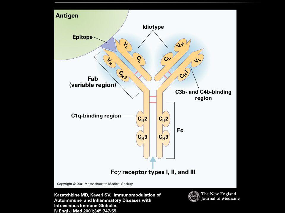 heavy chain (H) light chain (L) heavy chain (H) light chain (L) Immunoglobulin structure Fc region