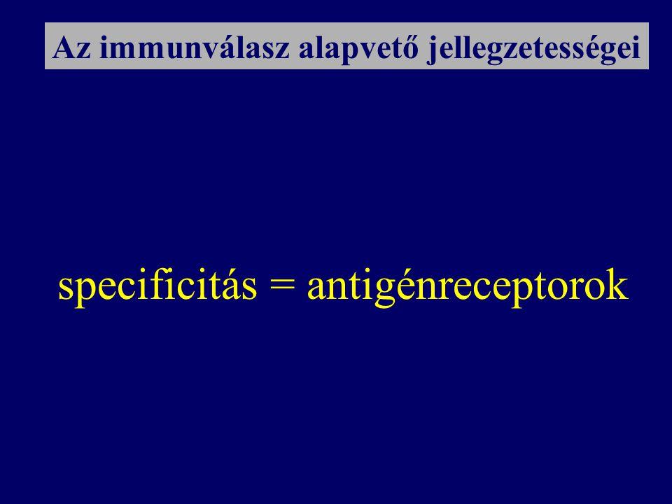 specificitás = antigénreceptorok Az immunválasz alapvető jellegzetességei