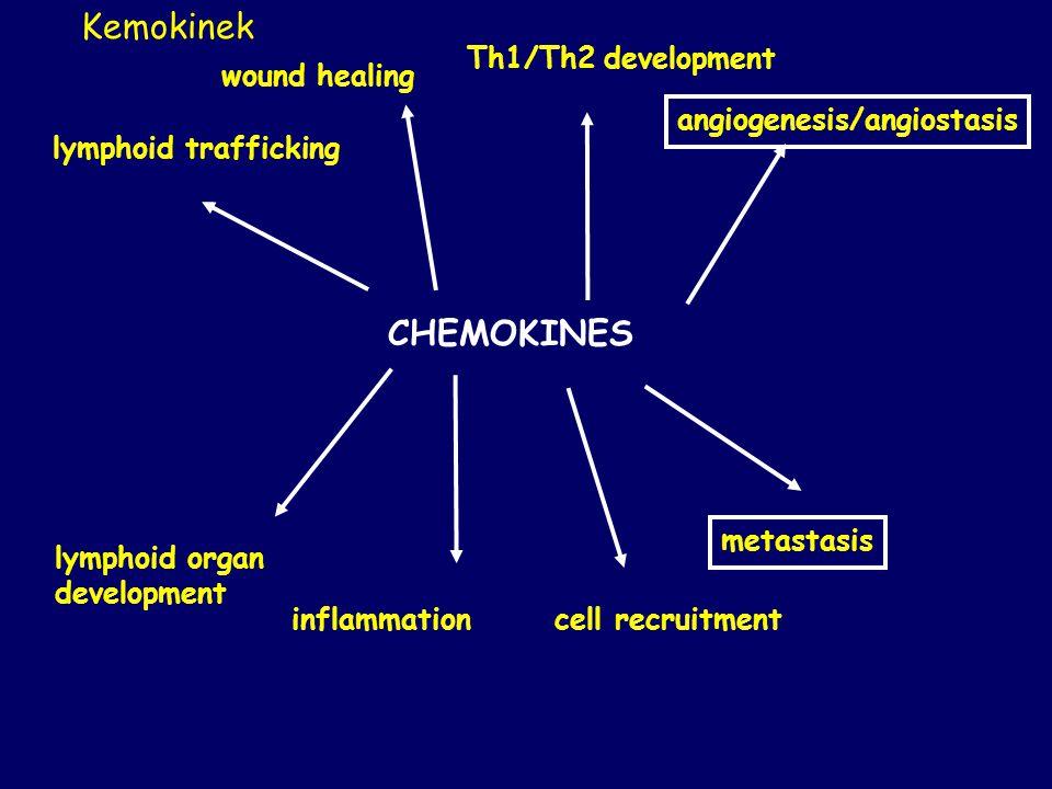 CHEMOKINES lymphoid trafficking wound healing Th1/Th2 development angiogenesis/angiostasis lymphoid organ development inflammationcell recruitment met