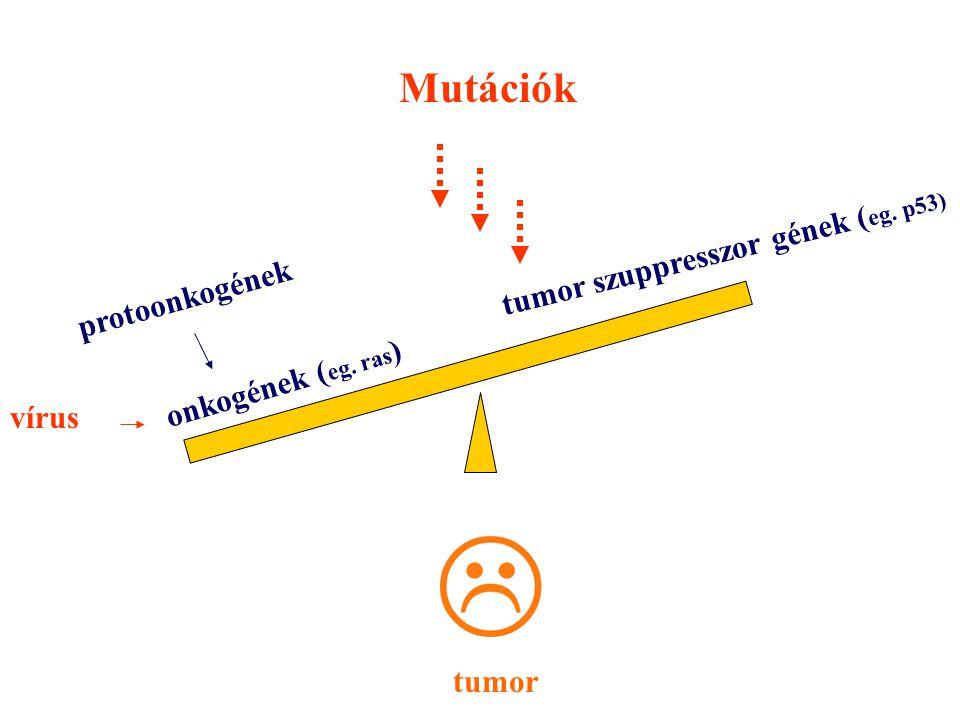 onkogének ( eg. ras ) tumor szuppresszor gének ( eg. p53) Mutációk protoonkogének tumor vírus
