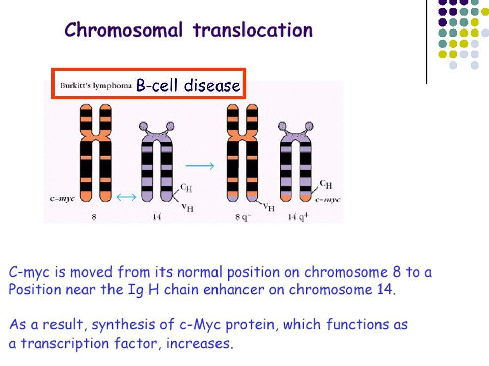 Normális sejtTumorsejt Megnőtt osztódási ráta megmenekülés az apoptózistól A differenciálódás hiánya Az öregedés hiánya