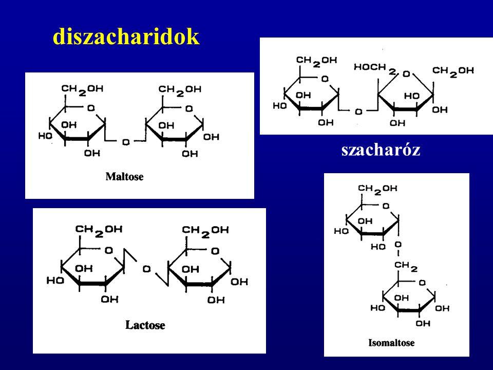 diszacharidok (maltóz, szacharóz, laktóz) döntően a bélhámsejtek által termelt diszacharidázok (maltáz, szacharáz, laktáz) bontják monoszacharidokra csecsemőkben nagy a laktázaktivitás, ami az életkor előrehaladtával csökken a felnőttek 10-15%-ának szervezete nem termel megfelelő mennyiségű laktázt (α-galaktozidáz) (tejcukor-érzékenység, laktózintolerancia) a népesség kisebb hányadánál szacharáz hiány is előfordulhat A szénhidrátok emésztése