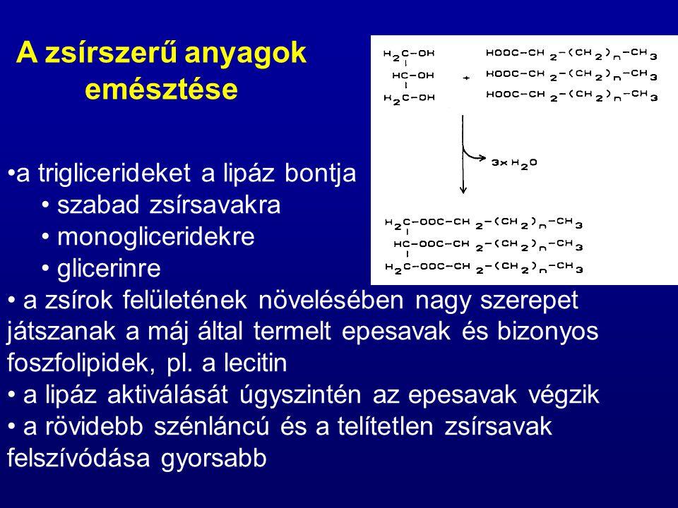 a koleszterin észtereit a koleszterinészteráz bontja szabad zsírsavakra koleszterinre a foszfolipideket foszfolipázok bontják glicerinre foszforsavra és a foszfolipidre jellemző N-tartalmú molekulára A zsírszerű anyagok emésztése