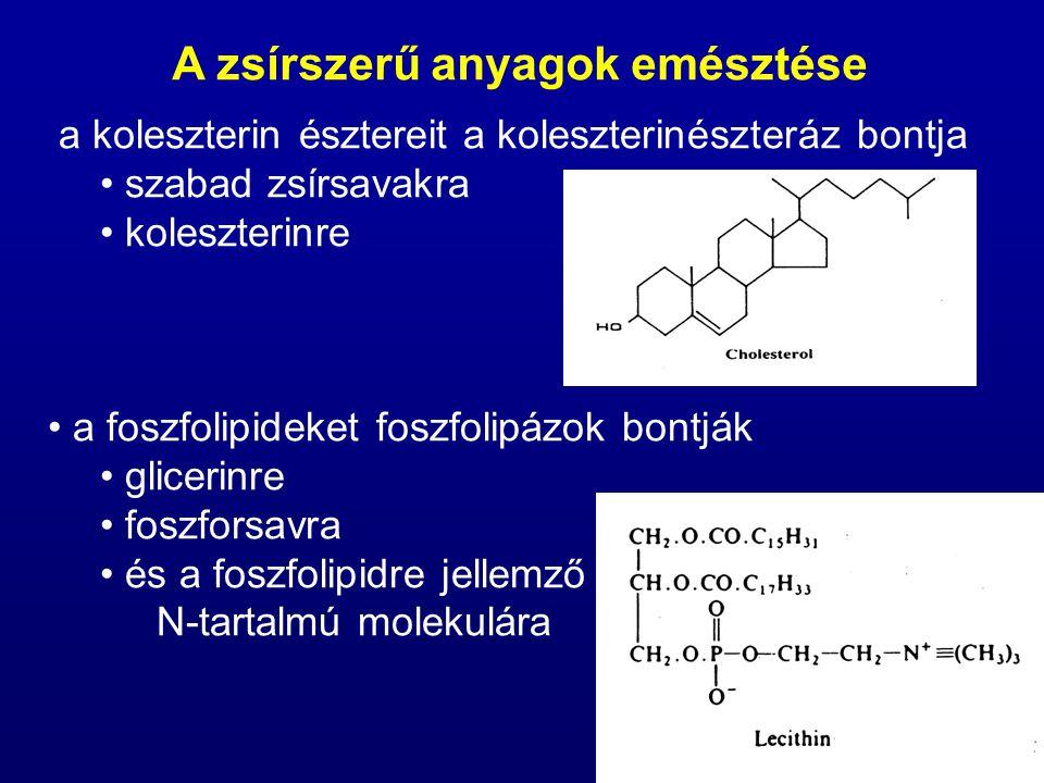 mivel az emésztés során lebontott egyszerűbb molekulák nem oldhatók vízben, a bélben ú.n.