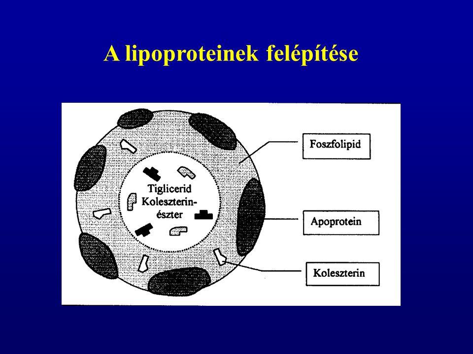 a lipoproteineket sűrűségük alapján csoportosítjuk kilomikron a bélből a felszívódott táplálóanyagokat szállítják, triglicerid-tartalmuk harmada a májba kerül nagyon kis sűrűségű lipoprotein (VLDL, very low density lipoprotein) a májba jutott, illetve itt szintetizált zsírsavakat, triglicerideket, koleszterint szállítja a perifériális szövetek felé A zsírszerű anyagok transzportja