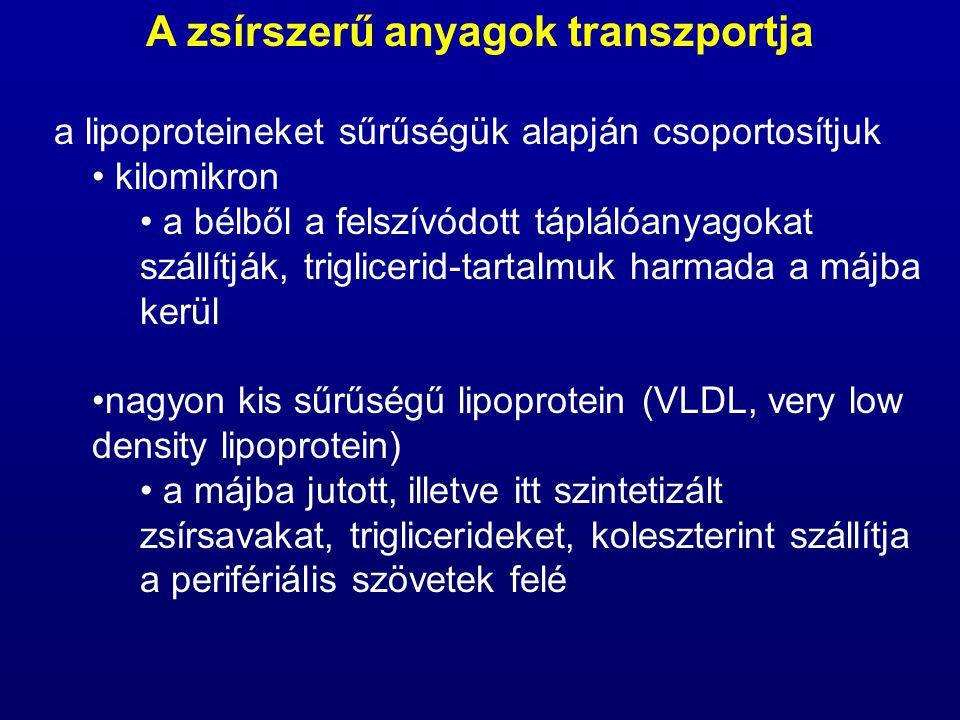 """kis sűrűségű lipoprotein (LDL, low density lipoprotein) a vér koleszterintartalmának zöme az LDL- ben található részben a VLDL-ből származnak, miután azok triglicerid-tartalmuk nagy részét leadták, nagy sűrűségű lipoprotein (HDL, high density lipoprotein) a szövetektől a májhoz szállítja a """"felesleges koleszterint (""""jó koleszterin ) A zsírszerű anyagok transzportja"""