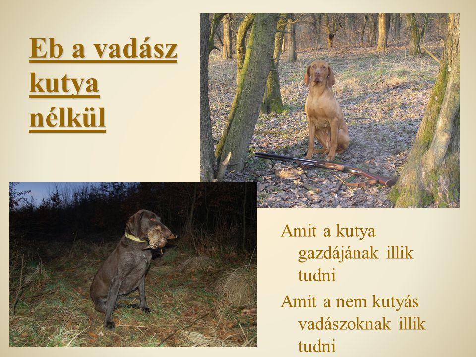 Eb a vadász kutya nélkül Amit a kutya gazdájának illik tudni Amit a nem kutyás vadászoknak illik tudni