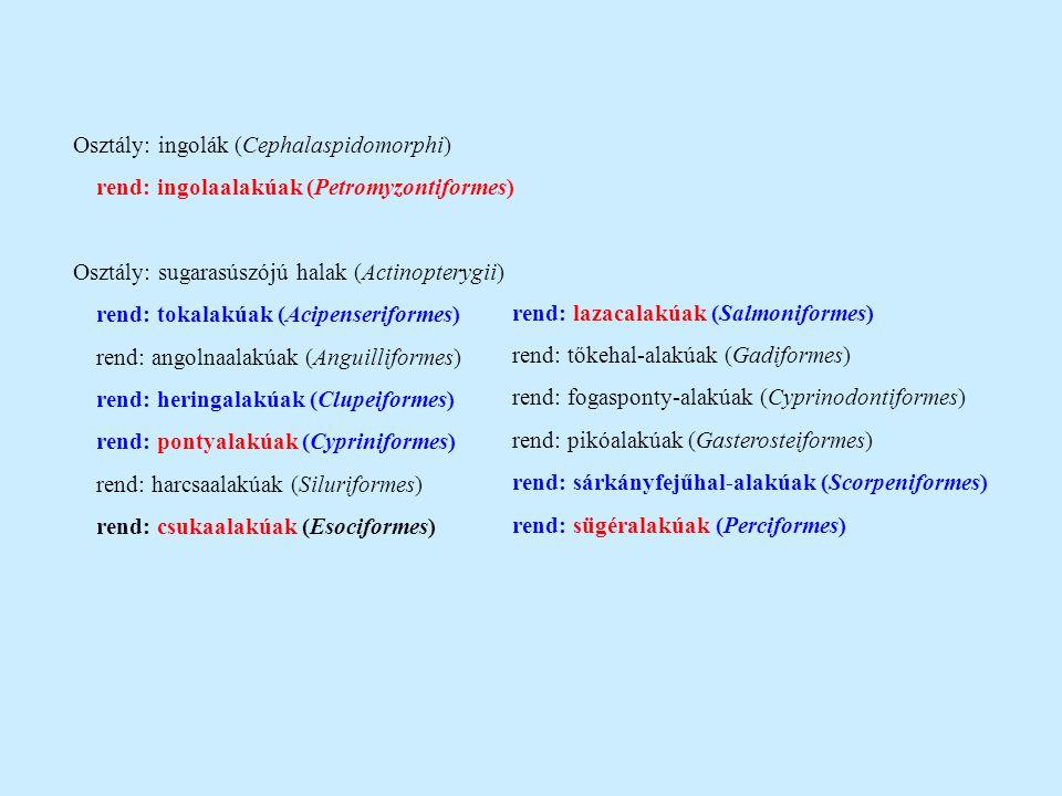 Osztály: ingolák (Cephalaspidomorphi) rend: ingolaalakúak (Petromyzontiformes) Osztály: sugarasúszójú halak (Actinopterygii) rend: tokalakúak (Acipens