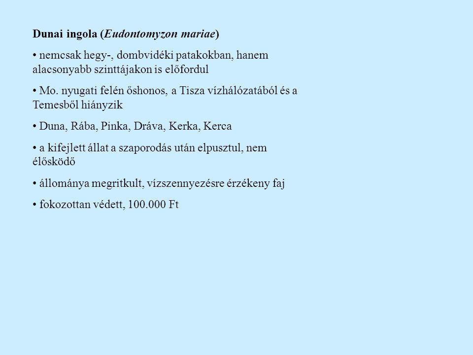 Dunai ingola (Eudontomyzon mariae) nemcsak hegy-, dombvidéki patakokban, hanem alacsonyabb szinttájakon is előfordul Mo. nyugati felén őshonos, a Tisz