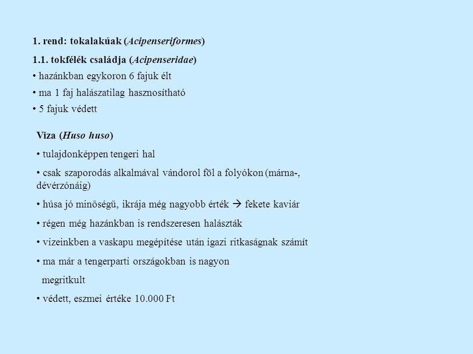1. rend: tokalakúak (Acipenseriformes) 1.1. tokfélék családja (Acipenseridae) hazánkban egykoron 6 fajuk élt ma 1 faj halászatilag hasznosítható 5 faj