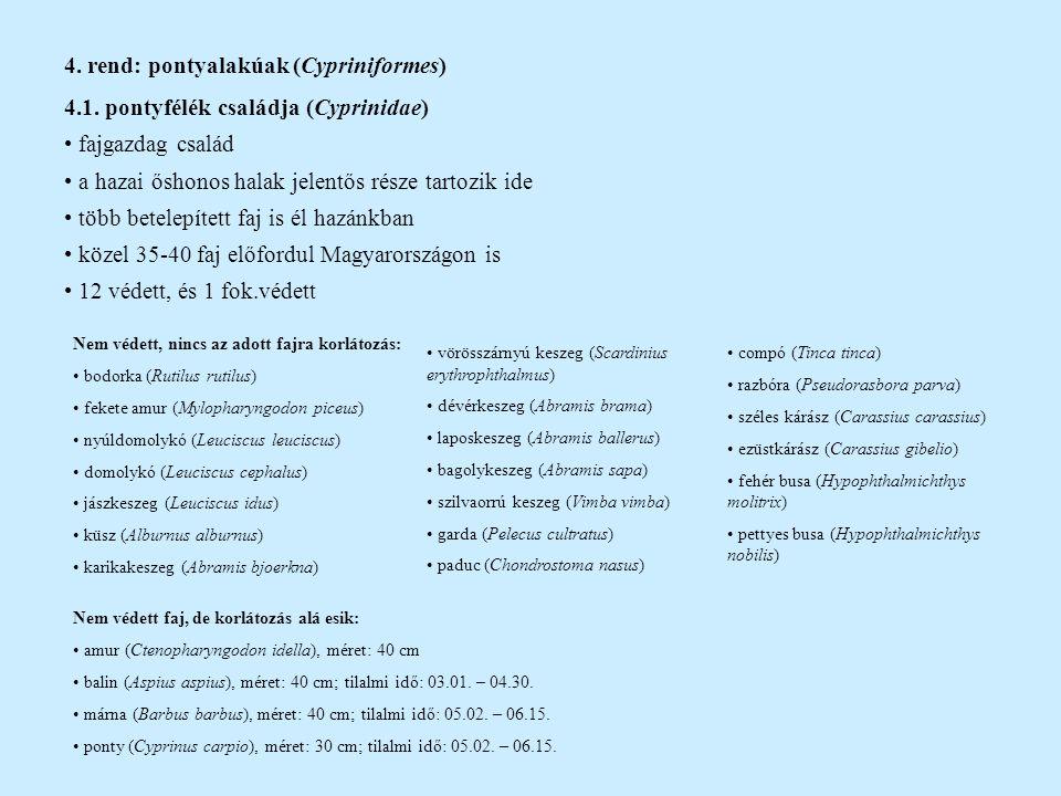 4. rend: pontyalakúak (Cypriniformes) 4.1. pontyfélék családja (Cyprinidae) fajgazdag család a hazai őshonos halak jelentős része tartozik ide több be