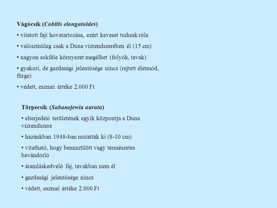 Vágócsík (Cobitis elongatoides) vitatott faji hovatartozása, ezért keveset tudunk róla valószínűleg csak a Duna vízrendszerében él (15 cm) nagyon sokf