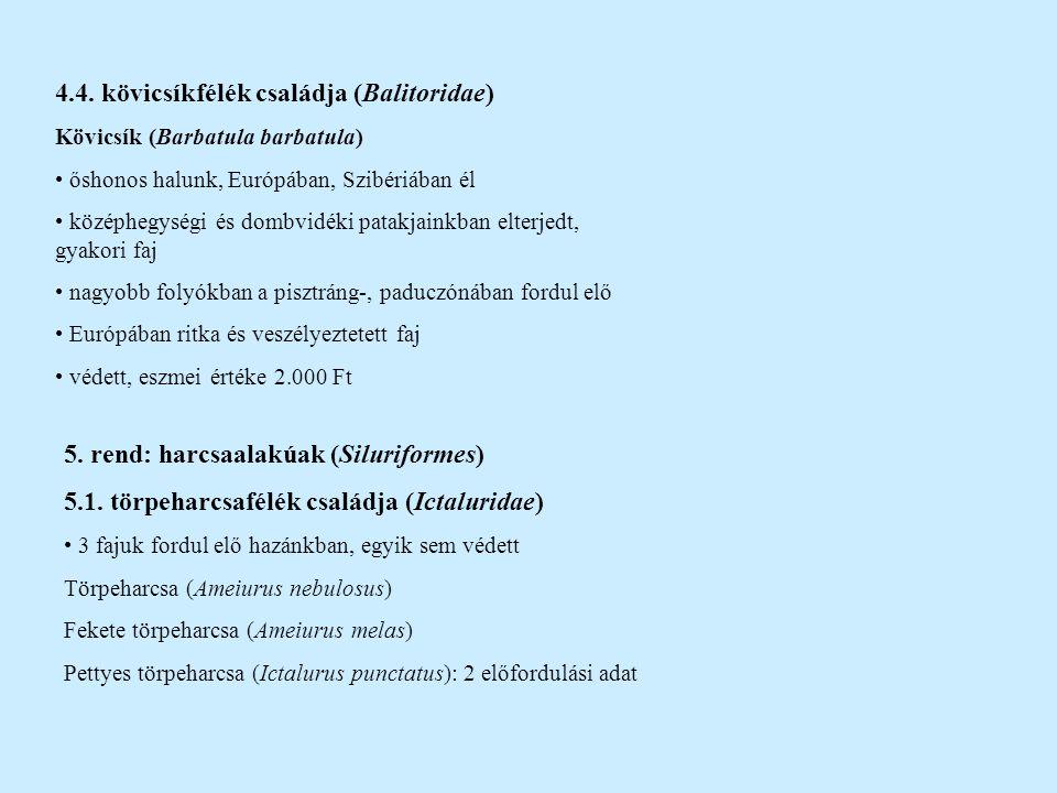 4.4. kövicsíkfélék családja (Balitoridae) Kövicsík (Barbatula barbatula) őshonos halunk, Európában, Szibériában él középhegységi és dombvidéki patakja