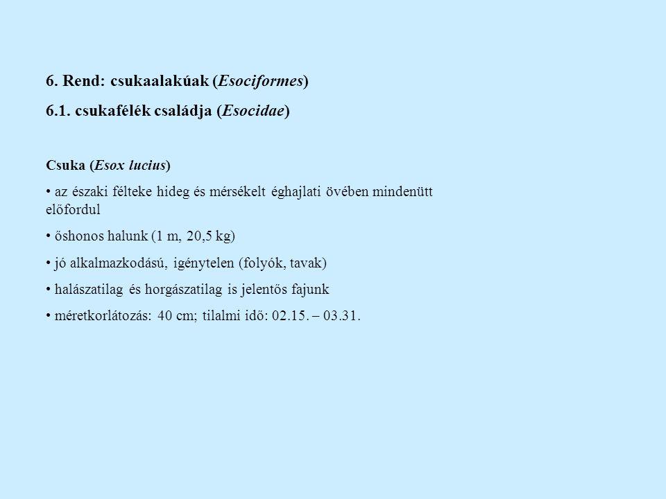 6. Rend: csukaalakúak (Esociformes) 6.1. csukafélék családja (Esocidae) Csuka (Esox lucius) az északi félteke hideg és mérsékelt éghajlati övében mind