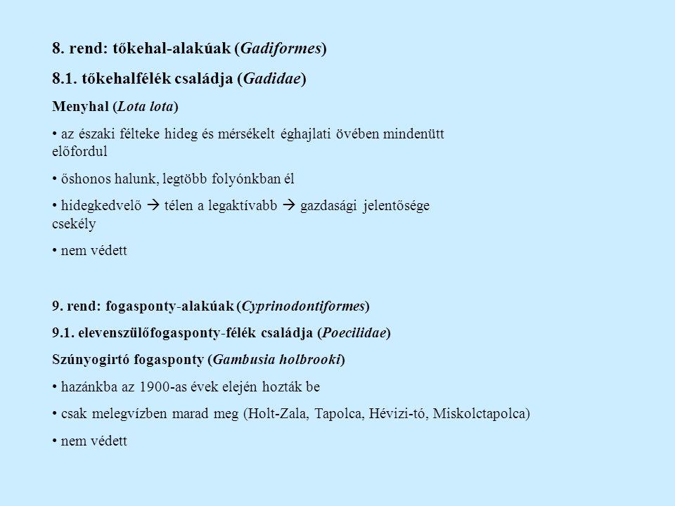 8. rend: tőkehal-alakúak (Gadiformes) 8.1. tőkehalfélék családja (Gadidae) Menyhal (Lota lota) az északi félteke hideg és mérsékelt éghajlati övében m