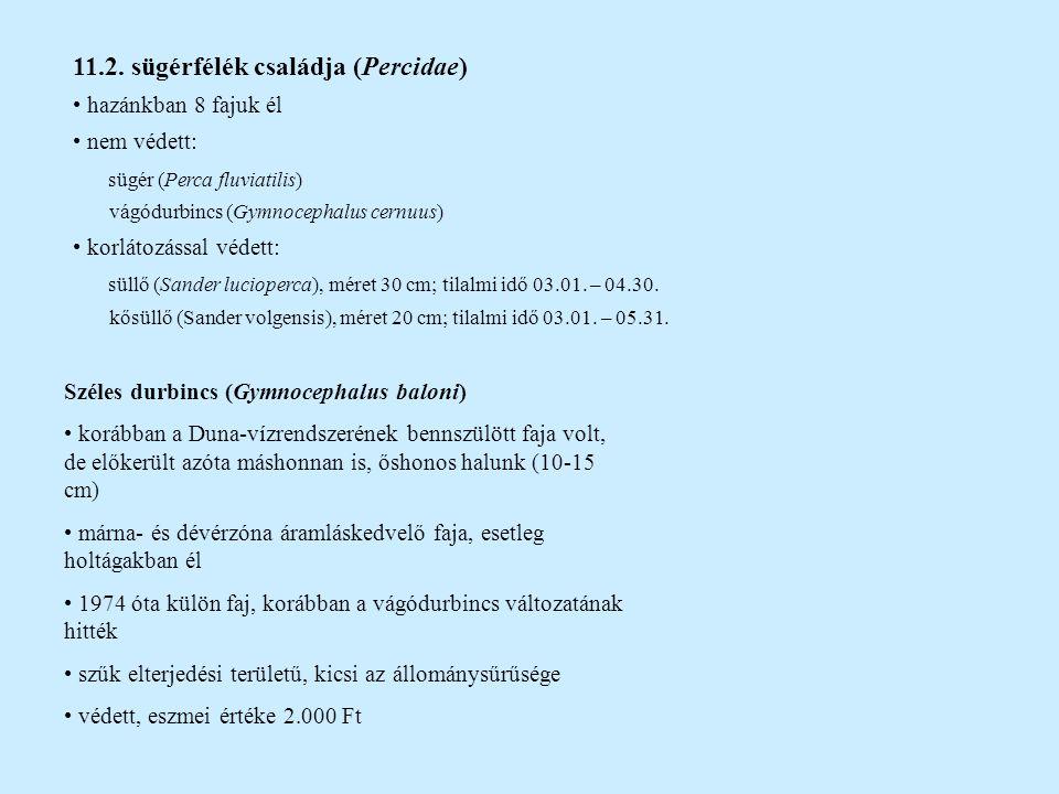 11.2. sügérfélék családja (Percidae) hazánkban 8 fajuk él nem védett: sügér (Perca fluviatilis) vágódurbincs (Gymnocephalus cernuus) korlátozással véd