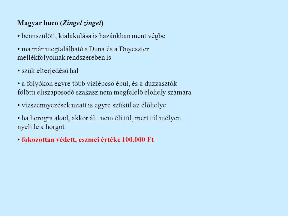 Magyar bucó (Zingel zingel) bennszülött, kialakulása is hazánkban ment végbe ma már megtalálható a Duna és a Dnyeszter mellékfolyóinak rendszerében is