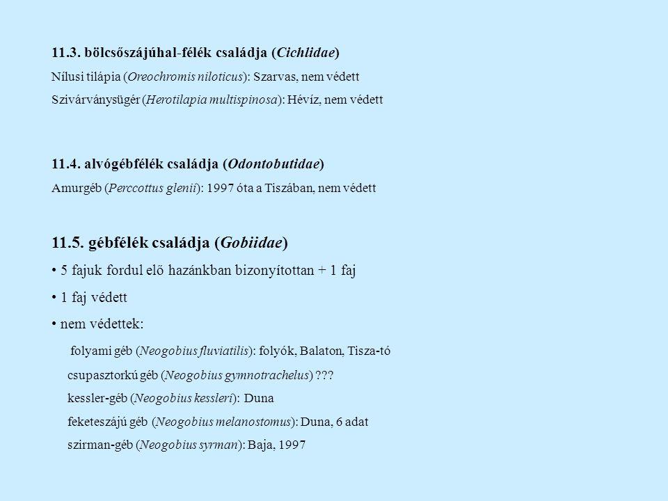 11.3. bölcsőszájúhal-félék családja (Cichlidae) Nílusi tilápia (Oreochromis niloticus): Szarvas, nem védett Szivárványsügér (Herotilapia multispinosa)