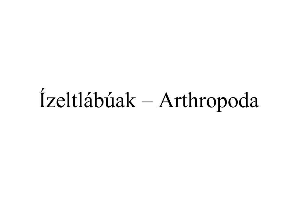 Altörzsek Altörzsek hazai és védett fajok számával: Csáprágósok – Chelicerata: 2500 - 15 Rákok – Crustacea: 350 - 1 Soklábúak – Myriapoda: 150 - 1 Rovarok – Hexapoda: 32000 – 427