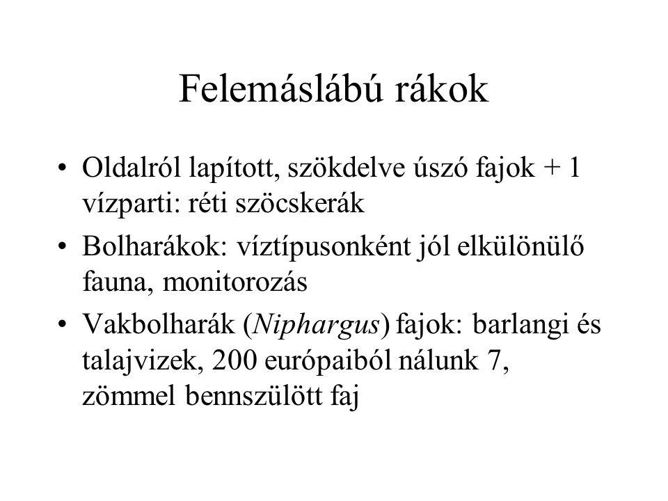 Levéllábú rákok Ágascsápú rákok – Cladocera: vízibolhák, 1-3 mm, planktonikus, közösségszintű biomonitorozás: nagy tömegben, 70 faj Kagylós levéllábúak: 6 faj Kisvizek, nyugaton pusztulóban, monitorozás Pajzsos levéllábúak: 2 pajzsosrák faj Csupasz levéllábúak: 9 tócsarák faj