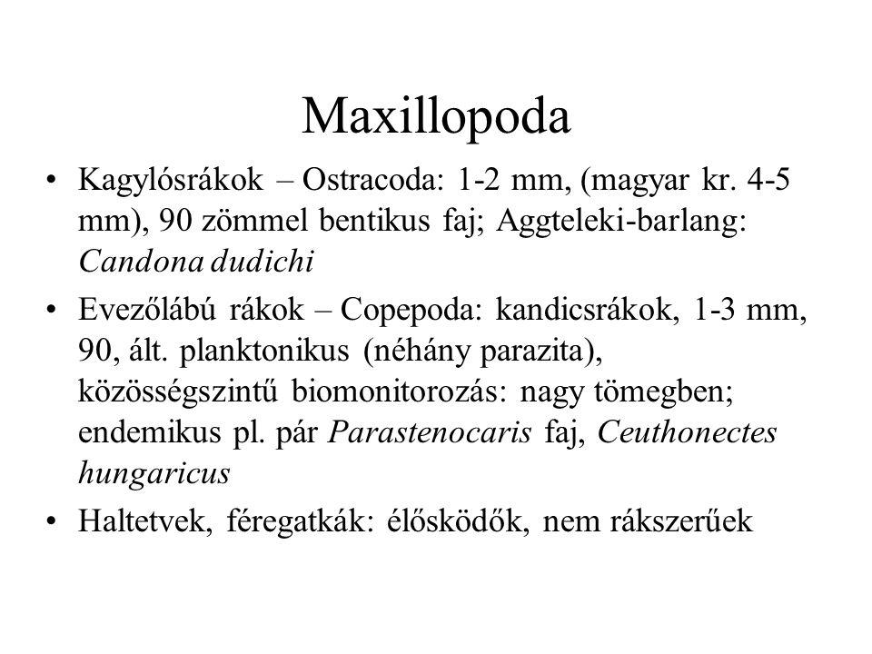 Soklábúak Mind a négy osztály Magyarországon: Szövőcsévések és villáscsápúak: jelentéktelen Ikerszelvényesek – Diplopoda: közel 100 hazai faj, gyenge terjedőképesség, növény+korhadék:  Vaspondrók (Julida): 50 faj, 1 bennszülött  Szövő ezerlábúak (Chordeumatida): 18-ból 8 Százlábúak – Chilopoda: 50 faj, 1 védett: öves szkolopendra (Scolopendra cingulata): Vértes
