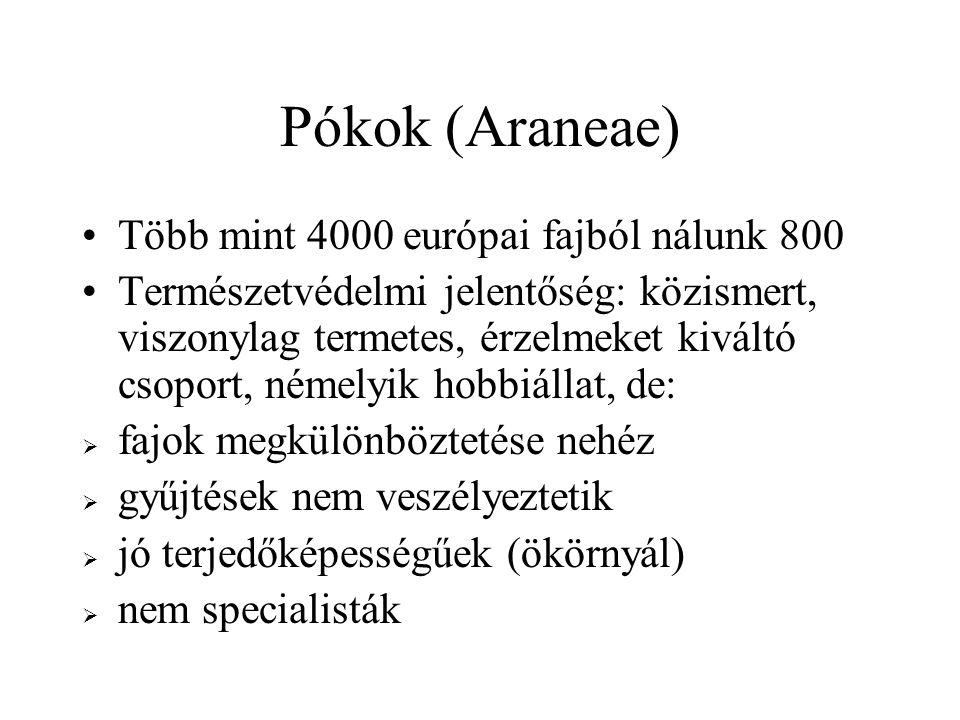 Állatföldrajz Általában széles elterjedésűek, még a szűk élőhelyigényűek is Mindössze két endemikus faj, mindkettő hamvaspókok (Dictynidae) – fonálszűrősök: Altella orientalis: Sas-hegy (Budapest) Dictyna szaboi: Alföld homoki gyepei A 15 védett pókfaj közt nincs bennszülött