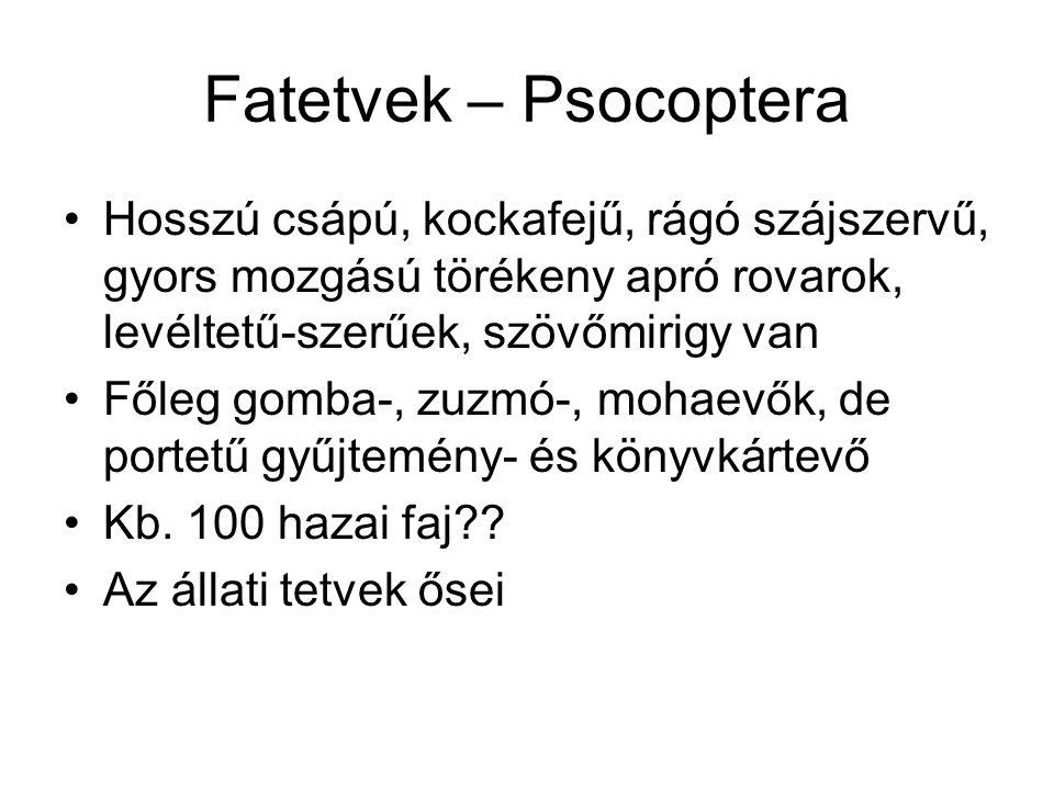 Fatetvek – Psocoptera Hosszú csápú, kockafejű, rágó szájszervű, gyors mozgású törékeny apró rovarok, levéltetű-szerűek, szövőmirigy van Főleg gomba-,
