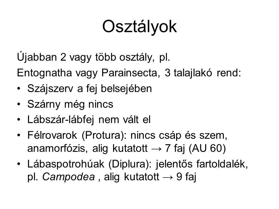 Osztályok Újabban 2 vagy több osztály, pl. Entognatha vagy Parainsecta, 3 talajlakó rend: Szájszerv a fej belsejében Szárny még nincs Lábszár-lábfej n