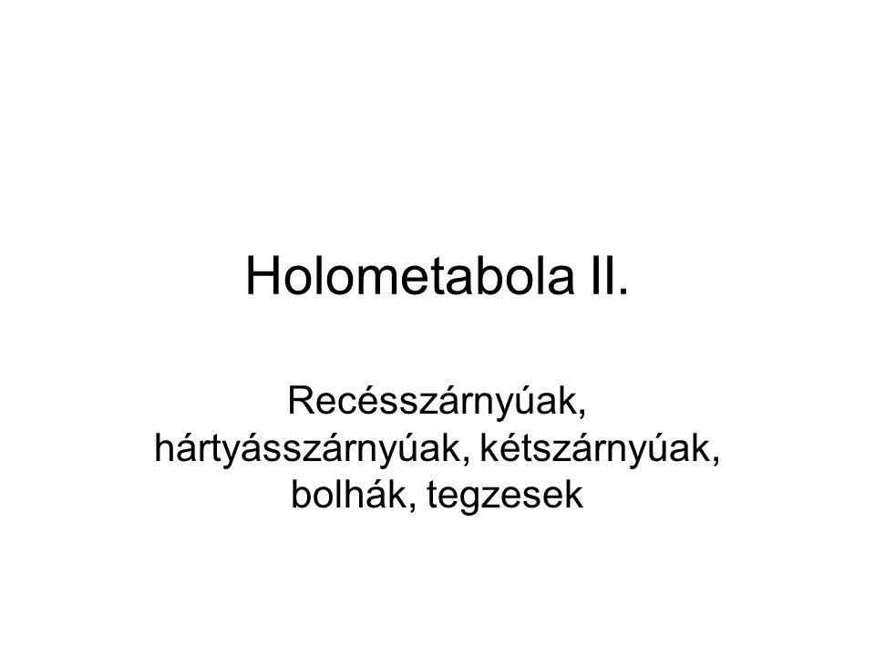 Holometabola II. Recésszárnyúak, hártyásszárnyúak, kétszárnyúak, bolhák, tegzesek