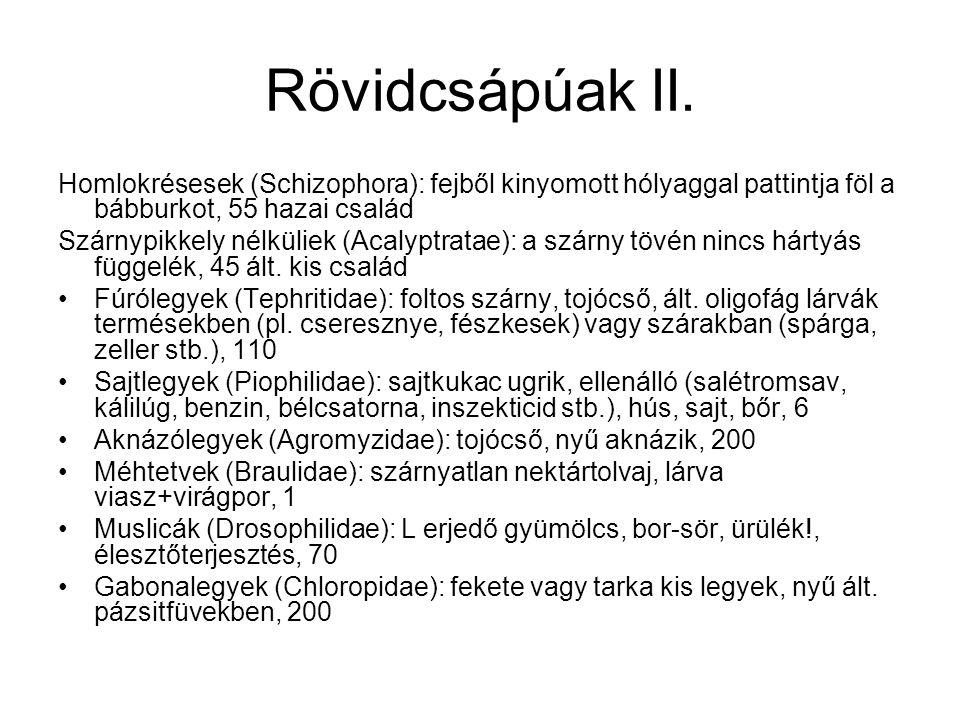 Rövidcsápúak II. Homlokrésesek (Schizophora): fejből kinyomott hólyaggal pattintja föl a bábburkot, 55 hazai család Szárnypikkely nélküliek (Acalyptra