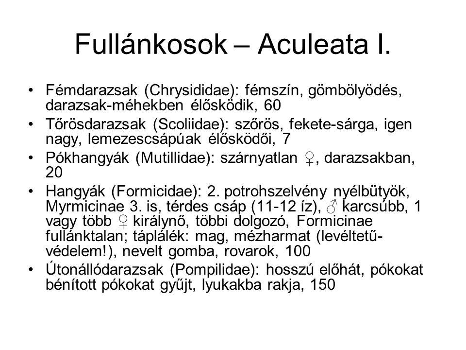 Fullánkosok – Aculeata I. Fémdarazsak (Chrysididae): fémszín, gömbölyödés, darazsak-méhekben élősködik, 60 Tőrösdarazsak (Scoliidae): szőrös, fekete-s