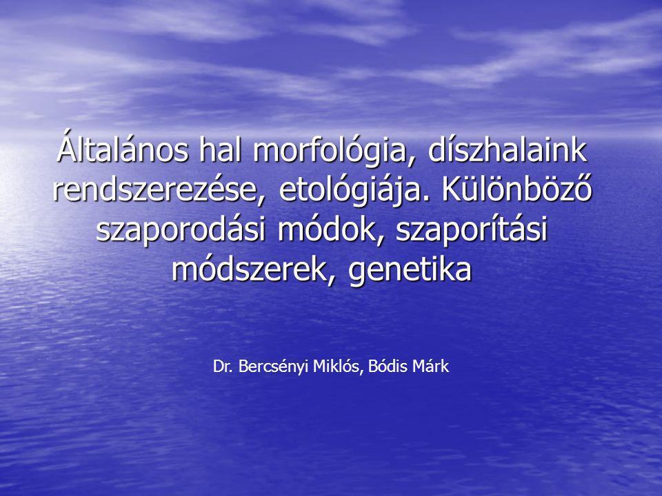 Általános hal morfológia, díszhalaink rendszerezése, etológiája. Különböző szaporodási módok, szaporítási módszerek, genetika Dr. Bercsényi Miklós, Bó