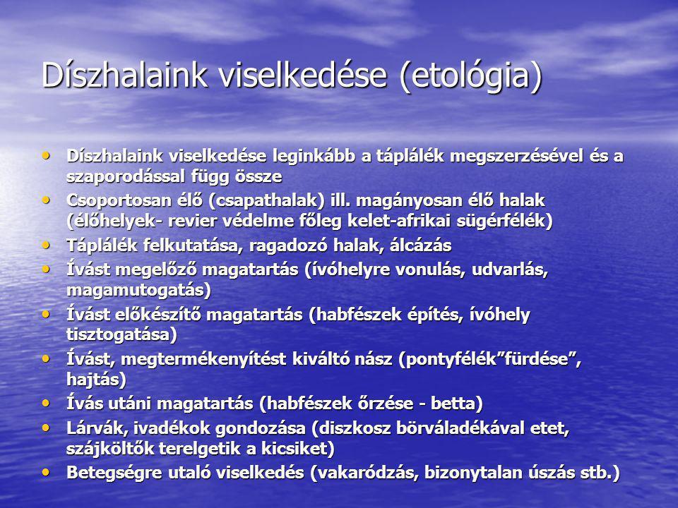 Díszhalaink viselkedése (etológia) Díszhalaink viselkedése leginkább a táplálék megszerzésével és a szaporodással függ össze Díszhalaink viselkedése l
