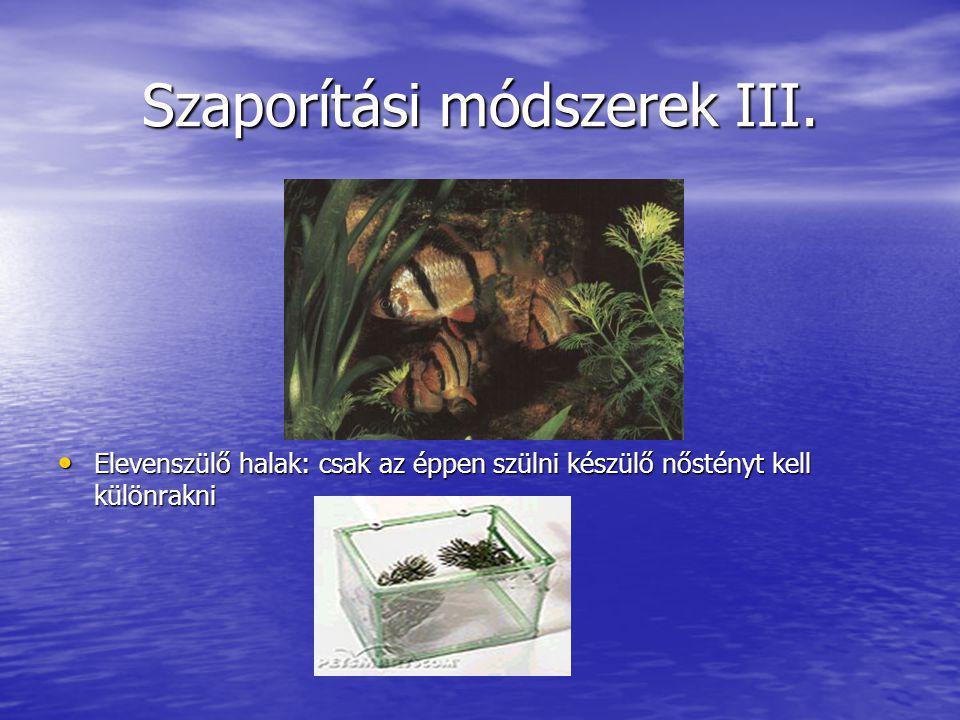 Szaporítási módszerek III. Elevenszülő halak: csak az éppen szülni készülő nőstényt kell különrakni Elevenszülő halak: csak az éppen szülni készülő nő