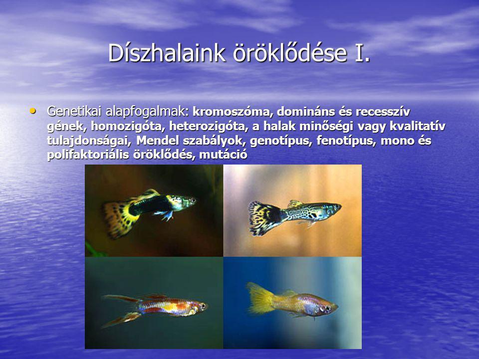 Díszhalaink öröklődése I. Genetikai alapfogalmak: kromoszóma, domináns és recesszív gének, homozigóta, heterozigóta, a halak minőségi vagy kvalitatív