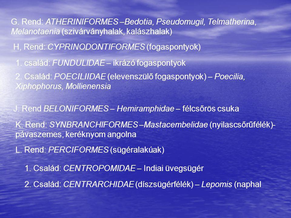 G. Rend: ATHERINIFORMES –Bedotia, Pseudomugil, Telmatherina, Melanotaenia (szivárványhalak, kalászhalak) H, Rend: CYPRINODONTIFORMES (fogaspontyok) 1.