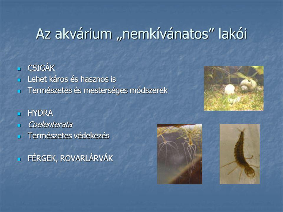 """Az akvárium """"nemkívánatos"""" lakói CSIGÁK CSIGÁK Lehet káros és hasznos is Lehet káros és hasznos is Természetes és mesterséges módszerek Természetes és"""