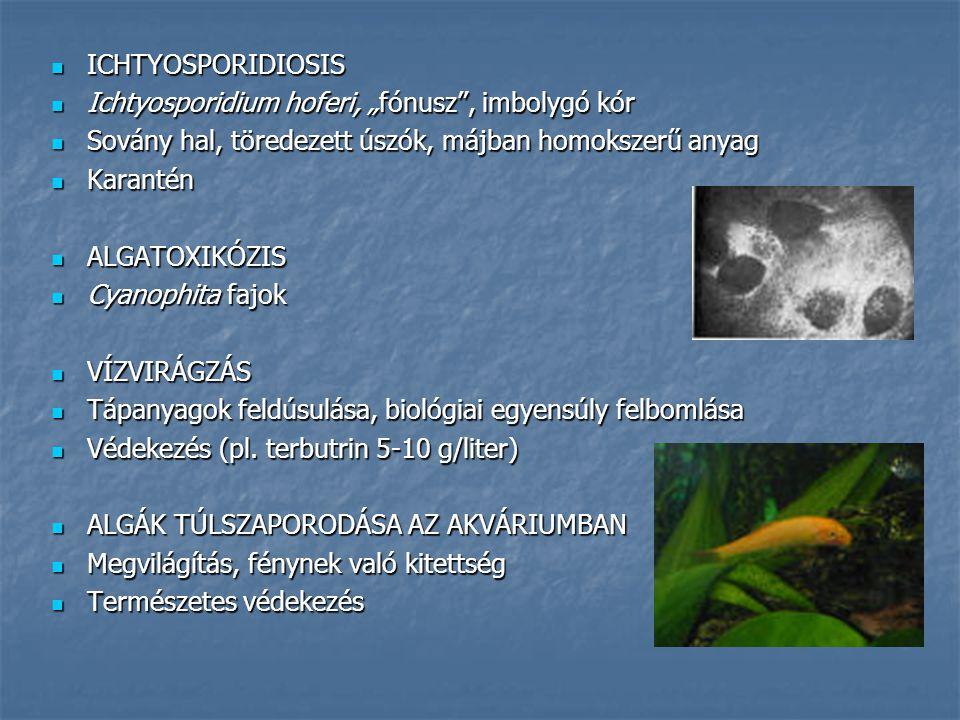 """ICHTYOSPORIDIOSIS ICHTYOSPORIDIOSIS Ichtyosporidium hoferi, """"fónusz"""", imbolygó kór Ichtyosporidium hoferi, """"fónusz"""", imbolygó kór Sovány hal, töredeze"""