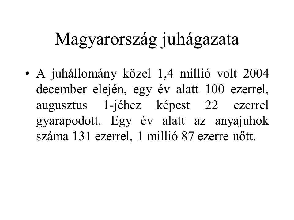 Magyarország juhágazata A juhállomány közel 1,4 millió volt 2004 december elején, egy év alatt 100 ezerrel, augusztus 1-jéhez képest 22 ezerrel gyarap