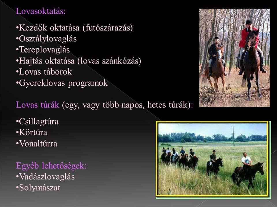 Lovasoktatás: Kezdők oktatása (futószárazás) Osztálylovaglás Tereplovaglás Hajtás oktatása (lovas szánkózás) Lovas táborok Gyereklovas programok Lovas
