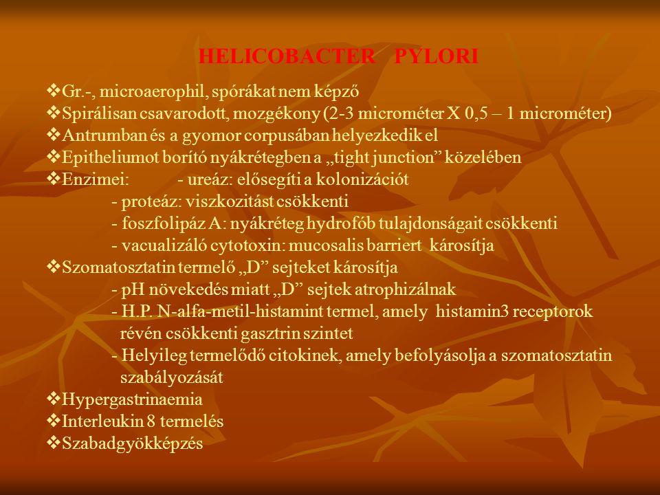 HELICOBACTER PYLORI  Gr.-, microaerophil, spórákat nem képző  Spirálisan csavarodott, mozgékony (2-3 microméter X 0,5 – 1 microméter)  Antrumban és