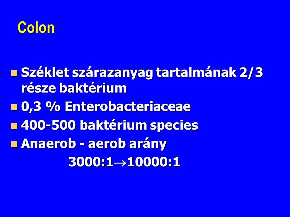 Colon Széklet szárazanyag tartalmának 2/3 része baktérium Széklet szárazanyag tartalmának 2/3 része baktérium 0,3 % Enterobacteriaceae 0,3 % Enterobacteriaceae 400-500 baktérium species 400-500 baktérium species Anaerob - aerob arány Anaerob - aerob arány 3000:1  10000:1